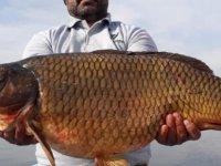 Gümüşgören barajında 150 santim uzunluğunda sazan balığı yakaladı