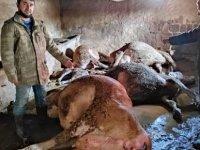 Bir evin ahırında çıkan yangında 12 baş hayvan telef oldu
