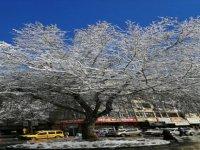 Kayseri'de yağan kar sonrası manzaralar-video