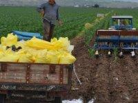 Çiftçi tarlaya gübreyi eli korka korka atıyor?