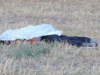 Sivas Gemerek'te Koyun yüzünden iki kardeşi öldürdü