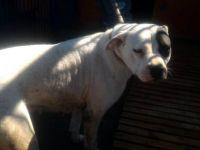 Kayseri'de Pitbull ve Dogo cins köpek yetiştirene 16 bin TL ceza kesildi