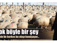 500 hamile koyun, 500 kuzusunu ölü doğurdu