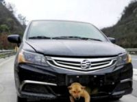 Köpeğine çarpan sürücüyü gasp eden sanığa 8 yıl hapis