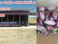 Başkan İbrahim Ulusoy Yamula Patlıcan Satışlarımız Başladı