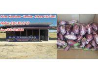 Yamula Patlıcan Satışlarımız Başladı: