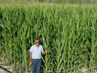Kayseri Şeker'in sözleşmeli silajlık mısır ekiminde talep patlaması yaşanıyor