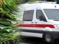 Kocasinan'da Üzüm yaprağı toplarken düşen kadın öldü