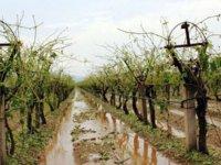 Çiftçilerin Kredi Borçları Bir Yıl Süreyle Erteleniyor