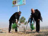 Ağaç dikme etkinlikleri periyodik aralıklarla gerçekleştiren Kocasinan Belediyesi