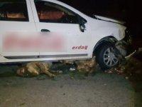 Develi'de aracın çarptığı 14 koyun telef oldu