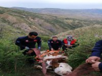 Bünyan'da Uçuruma yuvarlanan inek itfaiye tarafından kurtarıldı