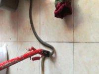 Hürriyet'te Markete giren yılan yakalandı