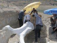 Kocasinan Taşhan'da çıkartılan fosil taşındı