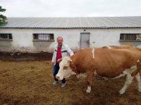 Kayseri'den çalınan hayvanlar, Siverek'te bulundu