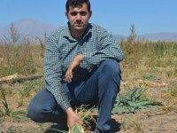 Kayseri'de ilk defa ekilen soğanın hasadı başladı