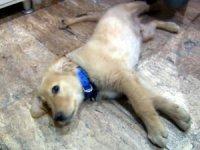 Kaybettiğini köpeğini sosyal medyadan buldu