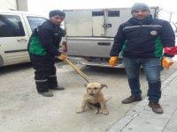 Ayakları kırılan köpek, tedavi altına alındı