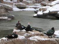 Beştepeler'de soğuk hava gölü dondurdu