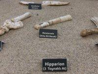 Yamula Barajı ve Barsama'da Fosil