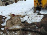 İncesu'da ahır çöktü 3 büyükbaş hayvan telef oldu