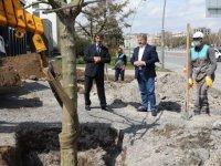 Melikgazi Belediyesi ağaçları dikmeye devam ediyor