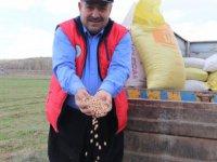Kocasinan Ziraat Odası Başkanı Güneş:Şuanda köylerde nohut ekimi başladı