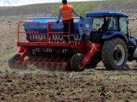 Talas Belediyesi 10 yıldır ekilmeyen araziye nohut ekti