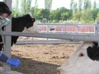 Korona virüse yakalanan çiftçinin hayvanlarına Tarım ve Orman Müdürlüğü ekipleri sahip çıktı