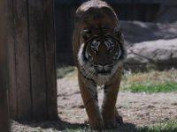 Kayseri Hayvanat Bahçesi kapılarını açıyor