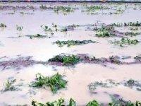 Yeşilhisar'da Çiftçilerin ekinlerini dolu vurdu
