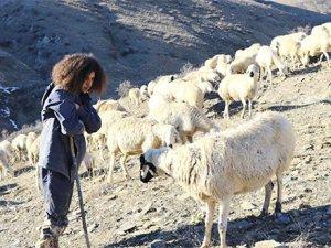 Yahyalı'da Üniversite öğrencisi genç 300 koyuna çobanlık yapıyor
